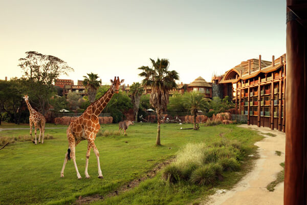 Disney S Animal Kingdom Lodge Walt Disney World